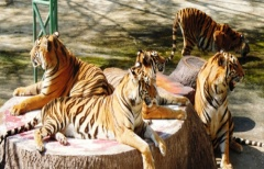 ZOO TOUR (DIRECT SHUTTLE TOUR)
